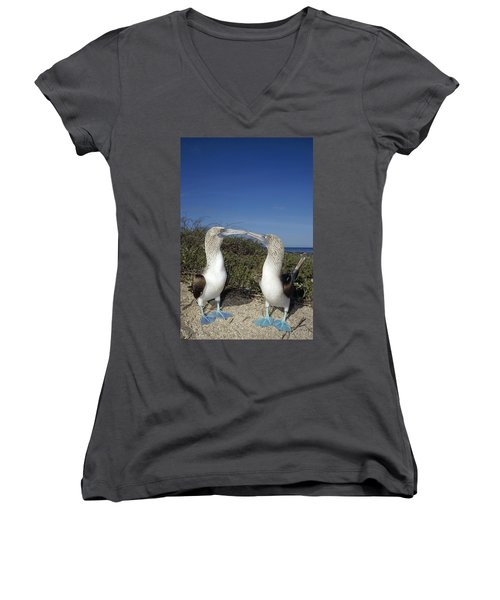Blue-footed Boobies Courting Galapagos Women's V-Neck T-Shirt (Junior Cut) by Tui De Roy