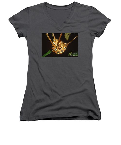 Boa Constrictor Women's V-Neck T-Shirt (Junior Cut) by Art Wolfe