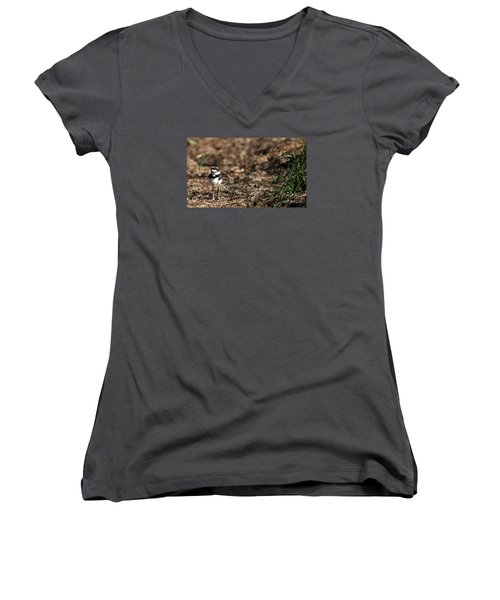 Killdeer Chick Women's V-Neck T-Shirt (Junior Cut) by Skip Willits