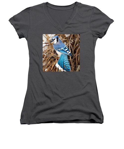 Portrait Of A Blue Jay Square Women's V-Neck T-Shirt (Junior Cut) by Bill Wakeley