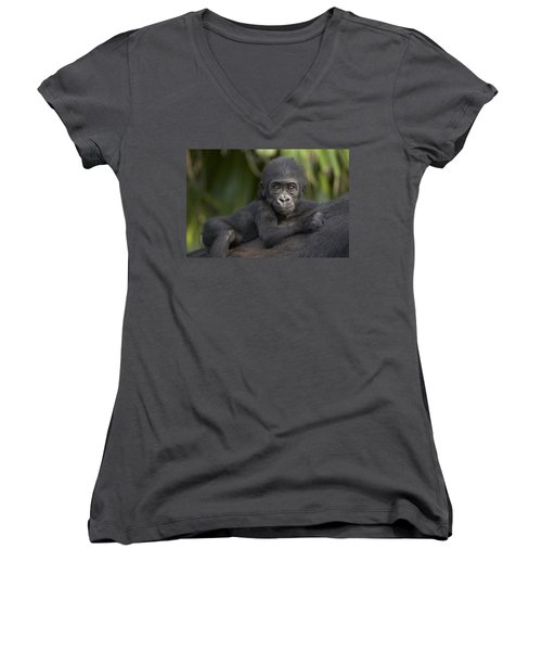Western Lowland Gorilla Gorilla Gorilla Women's V-Neck T-Shirt (Junior Cut) by San Diego Zoo