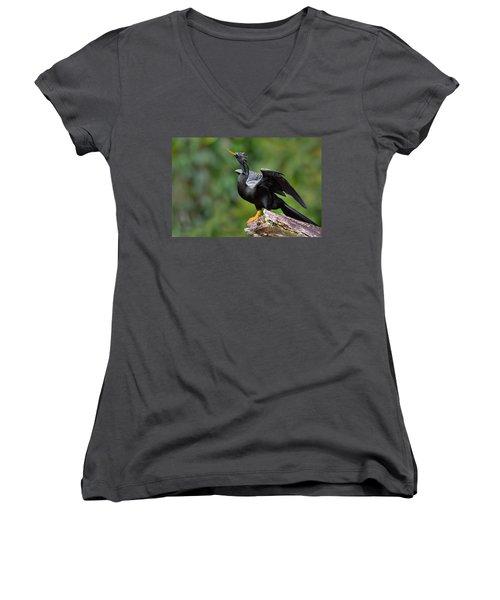 Anhinga Anhinga Anhinga Perching Women's V-Neck T-Shirt (Junior Cut) by Panoramic Images