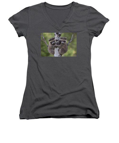 Raccoon Two Babies Climbing Tree North Women's V-Neck T-Shirt (Junior Cut) by Tim Fitzharris