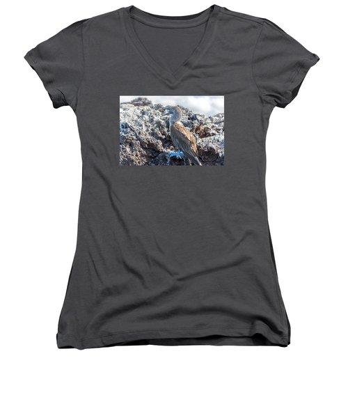 Blue Footed Booby Women's V-Neck T-Shirt (Junior Cut) by Jess Kraft