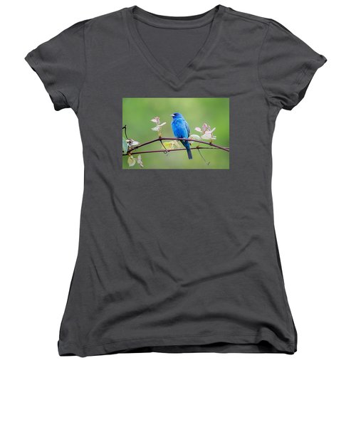 Indigo Bunting Perched Women's V-Neck T-Shirt (Junior Cut) by Bill Wakeley