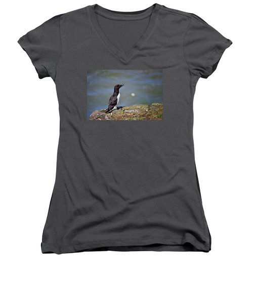 Razorbill Women's V-Neck T-Shirt (Junior Cut) by Vicki Field