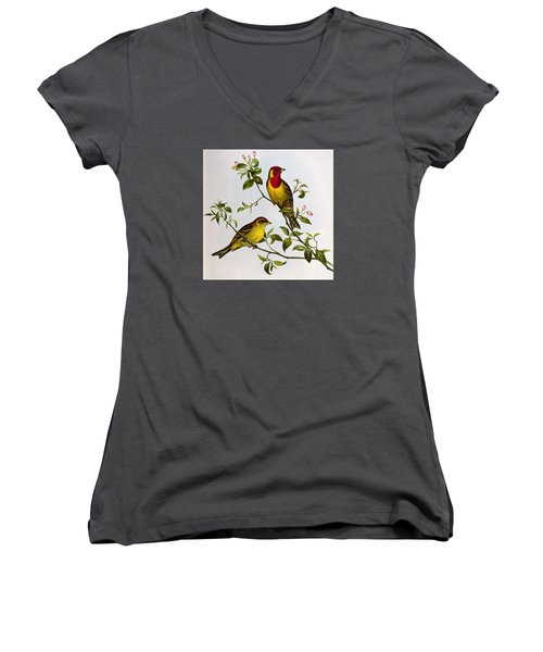 Red Headed Bunting Women's V-Neck T-Shirt (Junior Cut) by John Gould