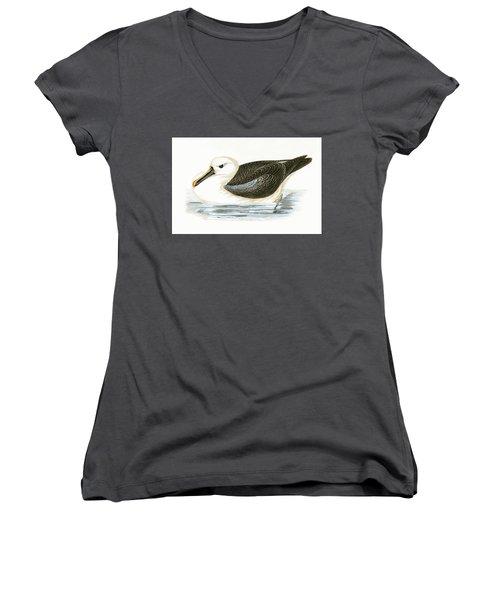 Yellow Nosed Albatross Women's V-Neck T-Shirt (Junior Cut) by English School