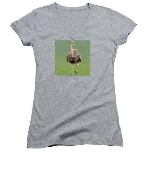 Emu Women's V-Neck T-Shirt (Junior Cut) by Ellen Henneke