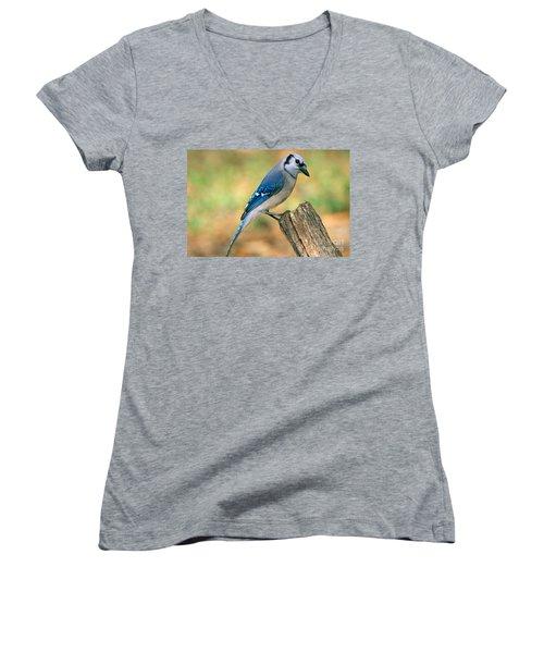 Blue Jay Women's V-Neck T-Shirt (Junior Cut) by Millard H. Sharp