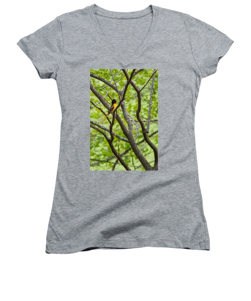 Baltimore Oriole Women's V-Neck T-Shirt (Junior Cut) by Bill Wakeley