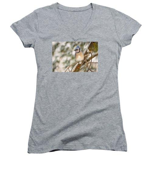Blue Jay Women's V-Neck T-Shirt (Junior Cut) by Everet Regal