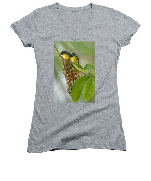 Close-up Of Two Common Tody-flycatchers Women's V-Neck T-Shirt (Junior Cut) by Panoramic Images