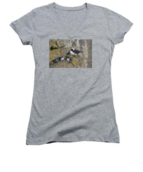 Least Auklets Perched On A Narrow Ledge Women's V-Neck T-Shirt (Junior Cut) by Milo Burcham