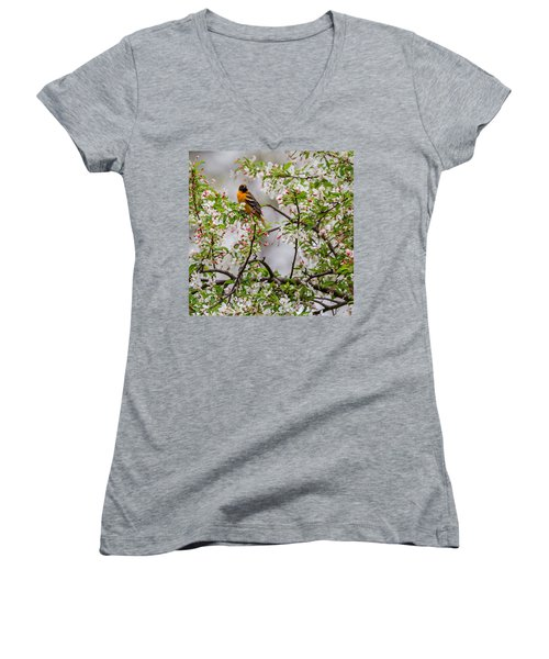 Oriole In Crabapple Tree Square Women's V-Neck T-Shirt (Junior Cut) by Bill Wakeley