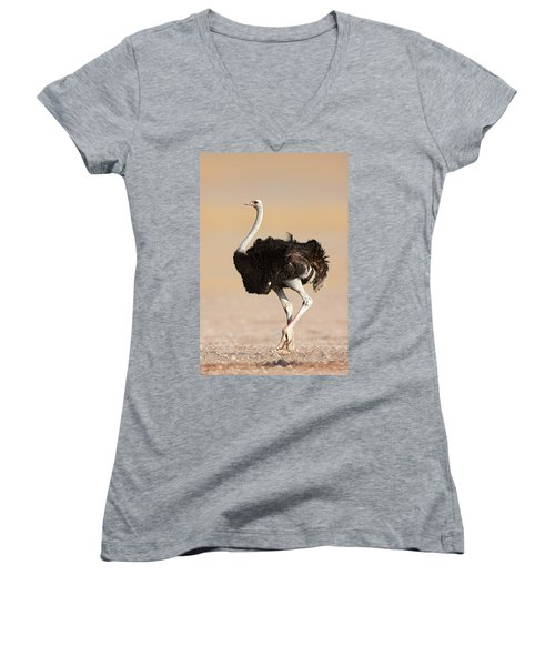 Ostrich Women's V-Neck T-Shirt (Junior Cut) by Johan Swanepoel