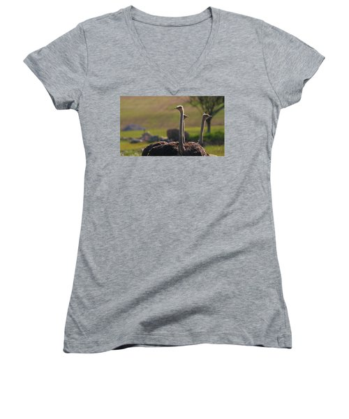 Ostriches Women's V-Neck T-Shirt (Junior Cut) by Dan Sproul