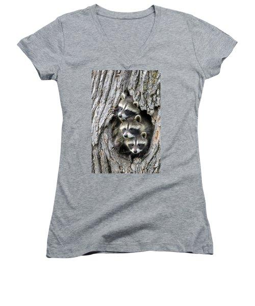 Raccoon Trio At Den Minnesota Women's V-Neck T-Shirt (Junior Cut) by Jurgen & Christine Sohns