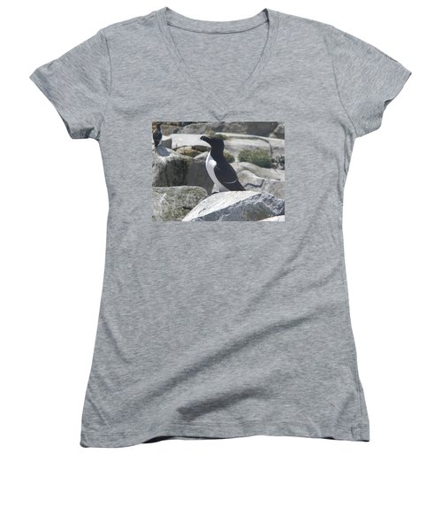 Razorbill Women's V-Neck T-Shirt (Junior Cut) by James Petersen