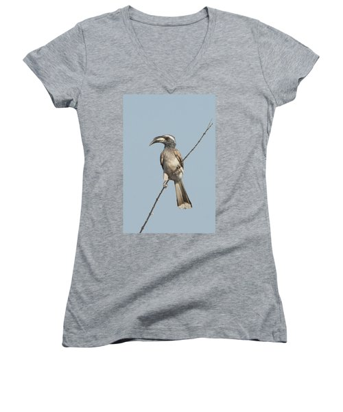African Grey Hornbill Tockus Nasutus Women's V-Neck T-Shirt (Junior Cut) by Panoramic Images