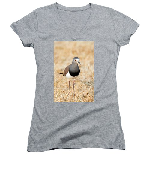 African Wattled Lapwing Vanellus Women's V-Neck T-Shirt (Junior Cut) by Panoramic Images
