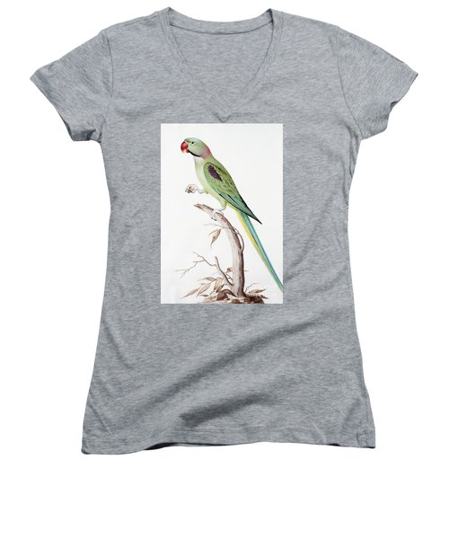 Alexandrine Parakeet Women's V-Neck T-Shirt (Junior Cut) by Nicolas Robert