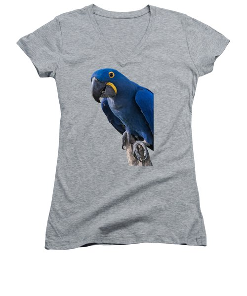 Blue Macaw Women's V-Neck T-Shirt (Junior Cut) by Mark Myhaver