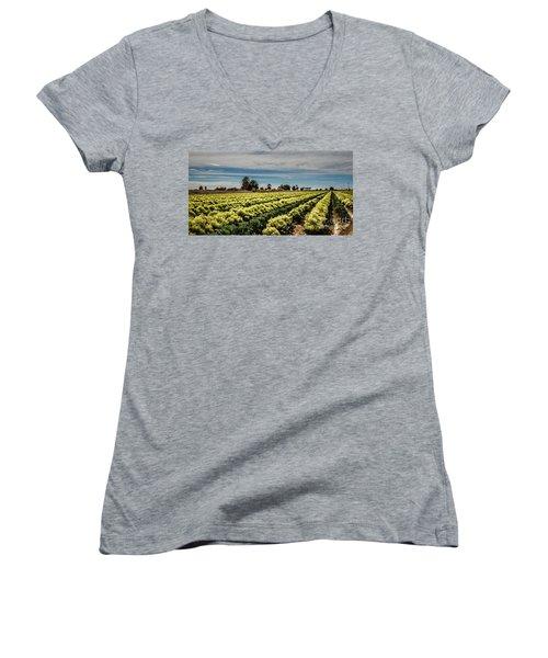 Broccoli Seed Women's V-Neck T-Shirt (Junior Cut) by Robert Bales