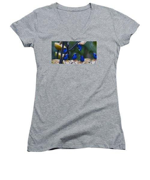 Honeycreeper Women's V-Neck T-Shirt (Junior Cut) by Betsy Knapp