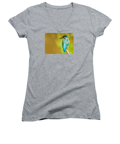 Kingfisher Women's V-Neck T-Shirt (Junior Cut) by Paul Neville