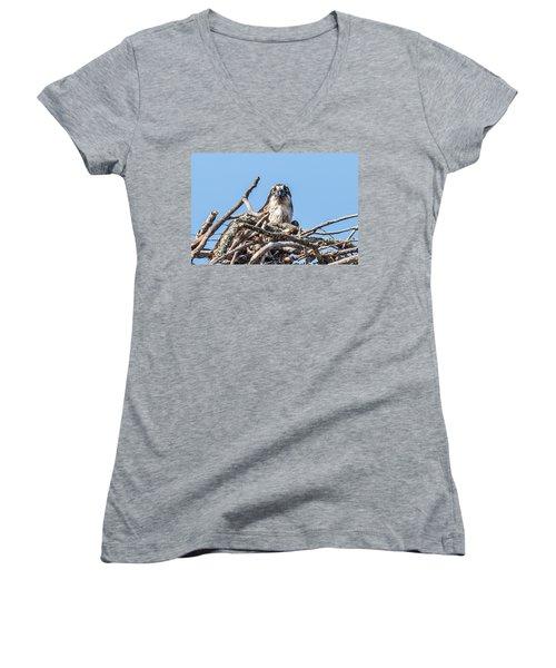Osprey Eyes Women's V-Neck T-Shirt (Junior Cut) by Paul Freidlund