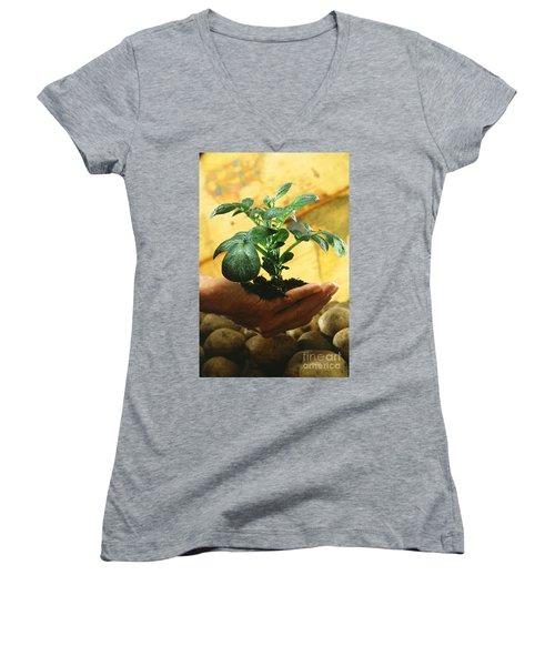 Potato Plant Women's V-Neck T-Shirt (Junior Cut) by Science Source