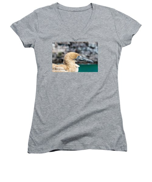 Red Footed Booby Juvenile Women's V-Neck T-Shirt (Junior Cut) by Jess Kraft