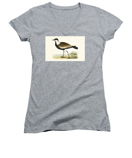 Spur Winged Plover Women's V-Neck T-Shirt (Junior Cut) by English School