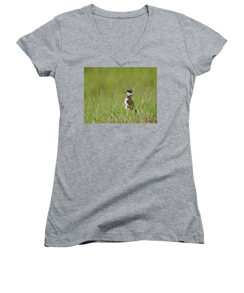 Young Killdeer In Grass Women's V-Neck T-Shirt (Junior Cut) by Mark Duffy