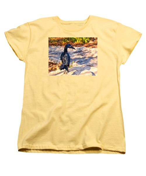 Abyssinian Ground Hornbill Women's T-Shirt (Standard Cut) by Chris Flees