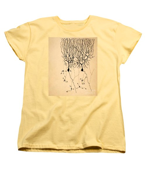Purkinje Cells By Cajal 1899 Women's T-Shirt (Standard Cut) by Science Source