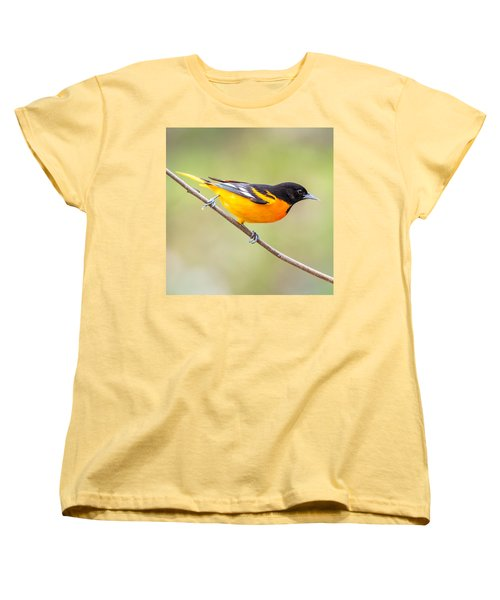 Baltimore Oriole Women's T-Shirt (Standard Cut) by Paul Freidlund