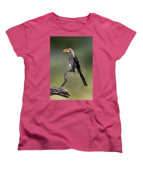 Southern Yellowbilled Hornbill Women's T-Shirt (Standard Cut) by Johan Swanepoel
