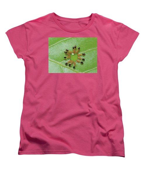 Ant Monomorium Intrudens Group Drinking Women's T-Shirt (Standard Cut) by Takashi Shinkai
