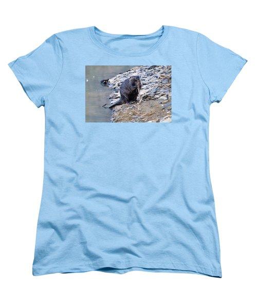 Beaver Sharpens Stick Women's T-Shirt (Standard Cut) by Chris Flees