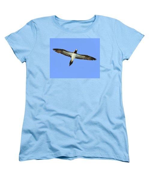 Brown Booby Women's T-Shirt (Standard Cut) by Tony Beck