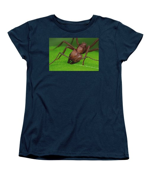 Leafcutter Ant Cutting Papaya Leaf Women's T-Shirt (Standard Cut) by Mark Moffett