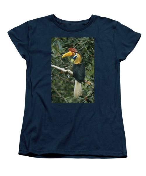 Sulawesi Red-knobbed Hornbill Male Women's T-Shirt (Standard Cut) by Mark Jones