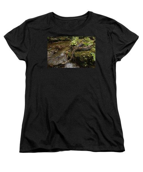 Boa Constrictor Crossing Stream Women's T-Shirt (Standard Cut) by Pete Oxford