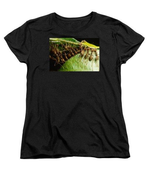 Weaver Ant Group Binding Leaves Women's T-Shirt (Standard Cut) by Mark Moffett