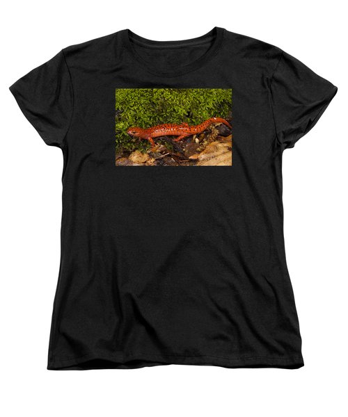 Red Salamander Pseudotriton Ruber Women's T-Shirt (Standard Cut) by Pete Oxford