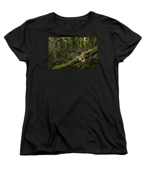 Boa Constrictor Boa Constrictor Coiled Women's T-Shirt (Standard Cut) by Pete Oxford
