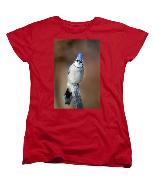 Backyard Birds Blue Jay Women's T-Shirt (Standard Cut) by Bill Wakeley