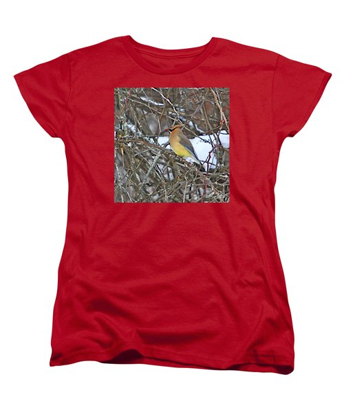 Cedar Wax Wing Women's T-Shirt (Standard Cut) by Robert Pearson